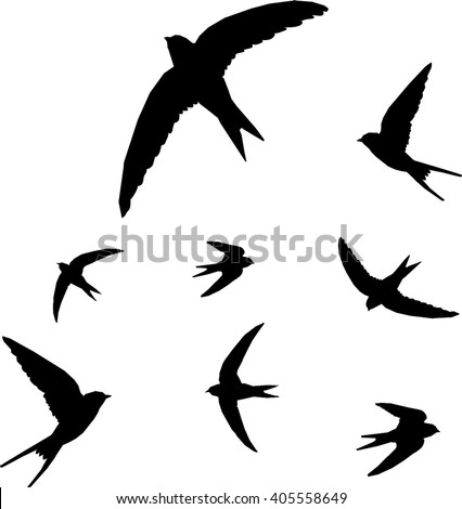 Bird Silhouette Stock Images, Royalty-Free Images & Vectors | Shutterstock