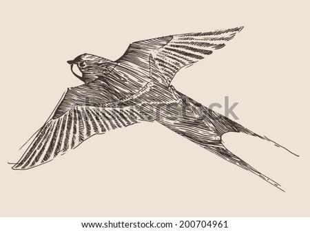 Flying bird illustration vintage - photo#28