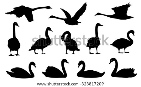 swan silhouettes on the white background - stock vector