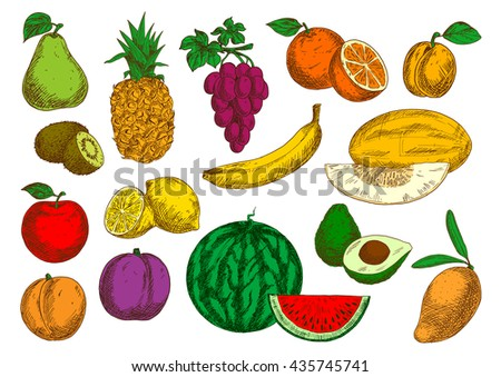 Sweet flavorful tropical mango and banana, pineapple and oranges, avocado, kiwis and lemons, selected garden apple, peach and grapes, pear, plum and apricot, ripe melon and watermelon fruits sketches - stock vector