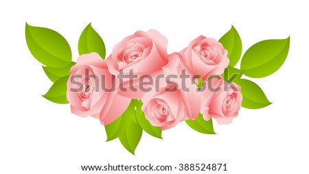 sweet pink roses isolated on white background. vector illustration