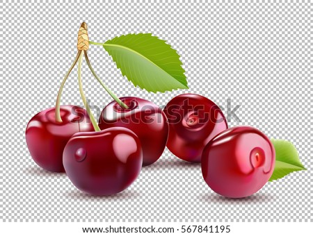 Sweet Red Cherry. Realistic isolated vector cherry.