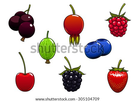Sweet ripe strawberry, blackberry, raspberry, cherry, black currant, blueberry, gooseberry and briar fruits berries isolated on white background - stock vector