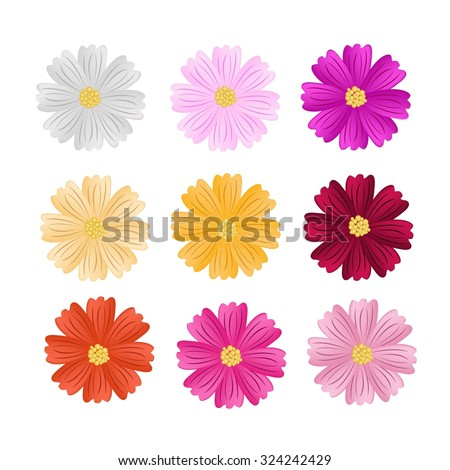 Symbol of Love, Illustration Collection of Cosmos Flowers or Cosmos Bipinnatus Isolated on White Background.
