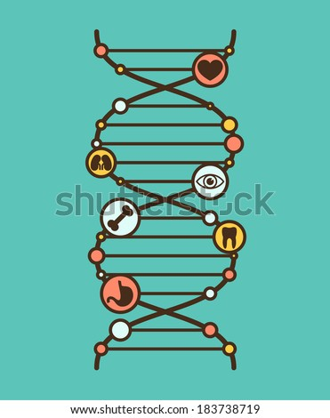 Symbolic DNA sign with simple organ icons in the nods. Vector illustration. - stock vector