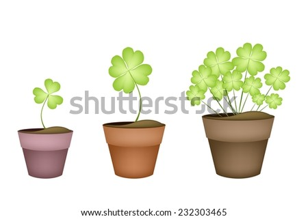 Symbols for Fortune and Luck, Illustration of Fresh Four Leaf Clover Plants or Shamrock in Terracotta Pots for St. Patricks Day Celebration.  - stock vector