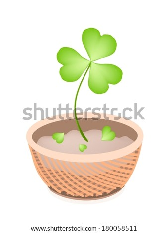 Symbols for Fortune and Luck, Illustration of Growing Four Leaf Clover Plants or Shamrock in A Beautiful Wicker Basket for St. Patricks Day Celebration.  - stock vector