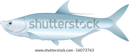 """Tarpon (Megalops atlanticus) saltwater fish. """"Full compatible. Created with gradients."""" - stock vector"""