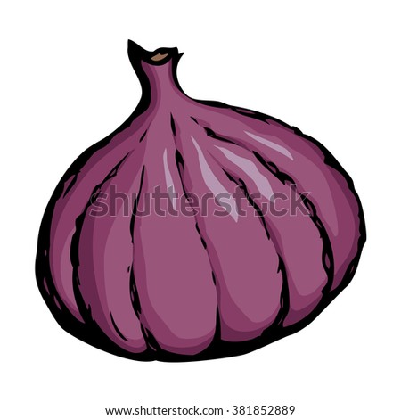 Tasty raw fresh sappy vivid lilac Ficus carica fruitful isolated on white backdrop. Freehand color hand drawn picture sketchy in art doodle style. View closeup with space for text - stock vector
