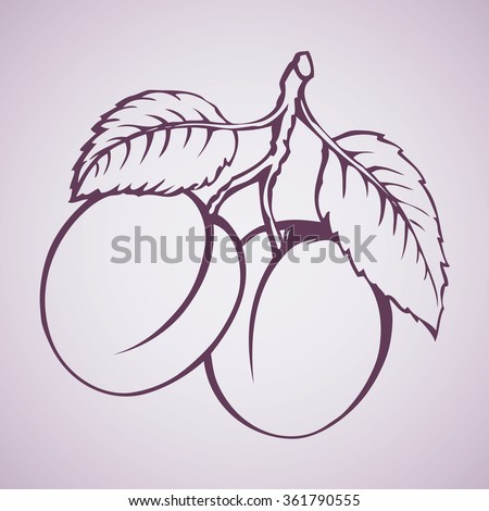 Tasty ripe raw fresh sappy Plums fruitful on tree sprig isolated on white backdrop. Freehand outline ink hand drawn picture sketchy in art doodle style pen on paper. View close-up with space for text - stock vector