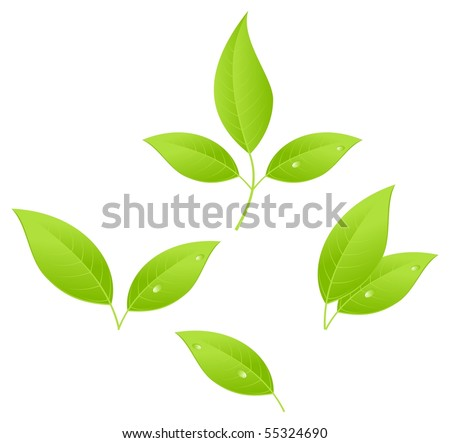 Tea leaves, young saplings. Vector illustration, isolated on a white. - stock vector
