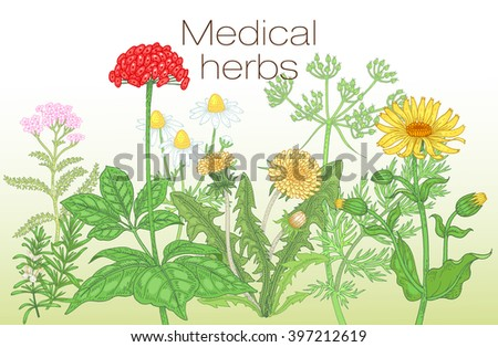 Template label, poster, page spread, design texts about alternative medicine. Vector illustration of flowers and medical herbs. Ginseng, chamomile, dandelion, arnica, yarrow, rosemary, caraway. - stock vector