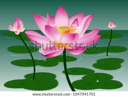 Beauty lotus flowers grow bloom pond stock vector 2018 1047041701 the beauty of the lotus flowers grow and bloom in a pond mightylinksfo