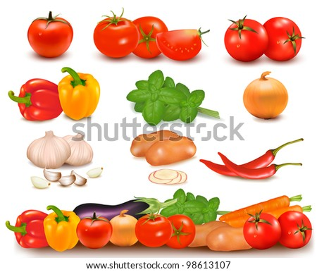 The big colorful collection of vegetables and vegetable design border. Vector.