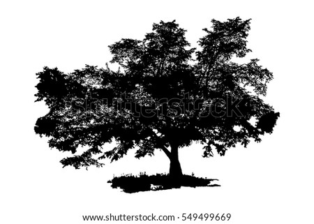 The black silhouette of a tree. Large tree isolated on white background. Vector illustration.