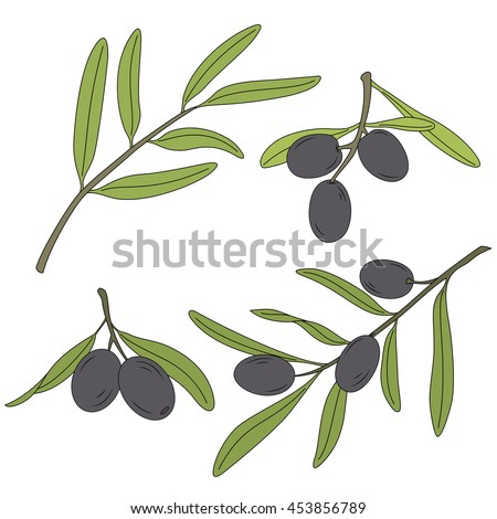 The branch of the olive tree with olives.