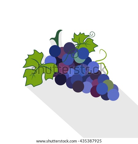 The branches of the Vine ornament vector illustration. Flat style. Grapes with long shadow. Grapes icon. Grapes wine or grapes juice. Grapes with green leaf isolated. Organic grapes sign. - stock vector