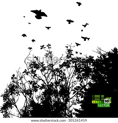 The branches of trees with leaves with birds. Vector - stock vector