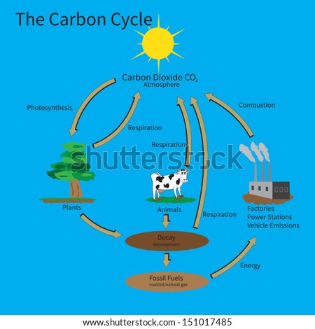 The Carbon Cycle showing how carbon is recycled in the environment. - stock vector