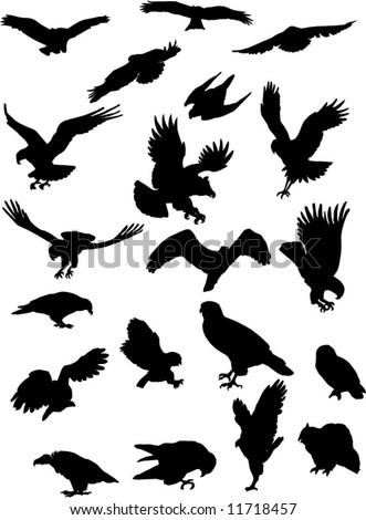 The collection of birds of prey