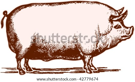 The fatty pig in illustration with time-worn effect of old etching - stock vector