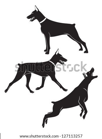 the figure shows a doberman dog