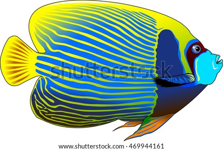 the figure shows the fish angelfish, vector
