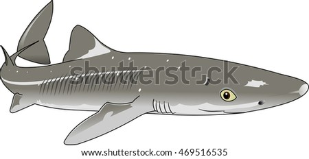 the figure shows the fish dogfish, vector