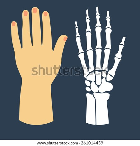 The flat design of the hand and the hand skeleton. Vector illustration. - stock vector