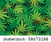 The green hemp, cannabis leaf background texture - stock photo