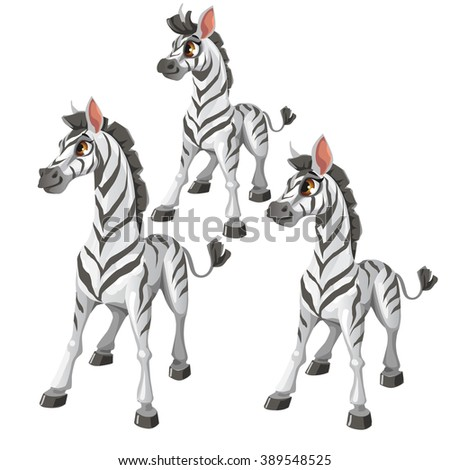 The growth stages of a Zebra. Animals isolated on a white background. Vector illustration. - stock vector