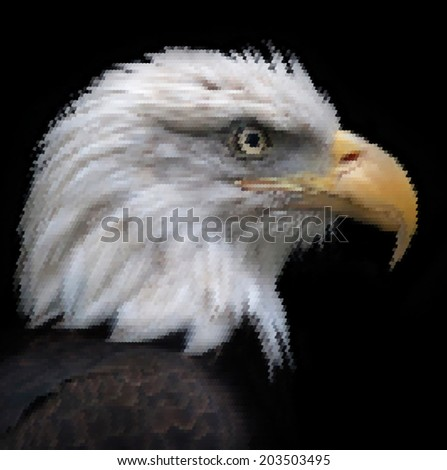 The head of a bald eagle, haliaeetus leucocephalus, isolated on black. Side face portrait of American eagle, US national character, very beautiful bird with proud expression. Vector scaly image. - stock vector