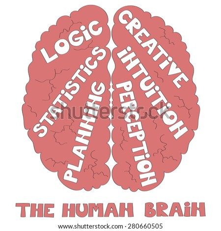 The human brain vector illustration  - stock vector