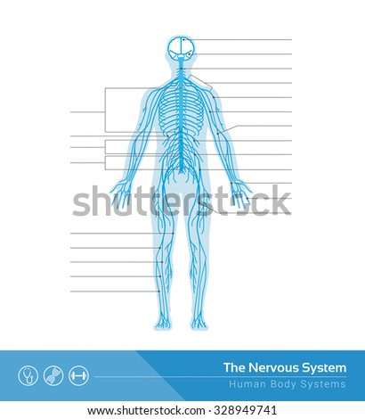 Human nervous system on display - photo#27