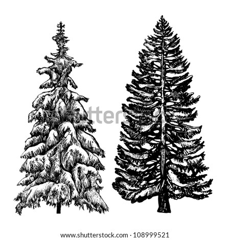 The illustration - drawn with ink and pen spruces as an imitation of an engraving and an element of flora - stock vector