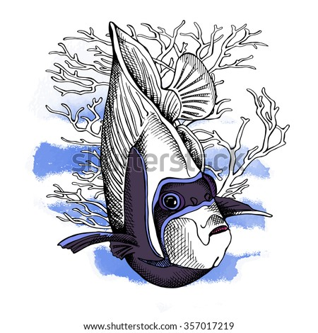 The image of the fish Emperor Angelfish and coral. Vector illustration. - stock vector