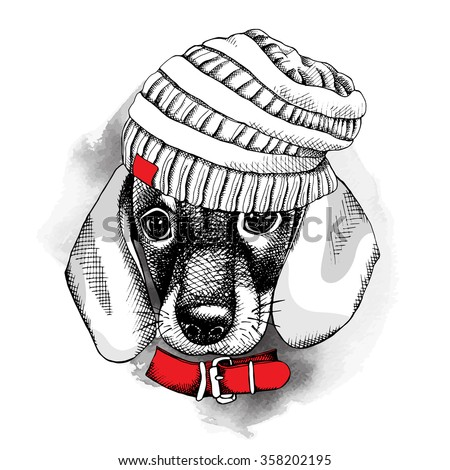 The image with the portrait of the dog Dachshund in the knitted hat with the collar. Vector illustration. - stock vector