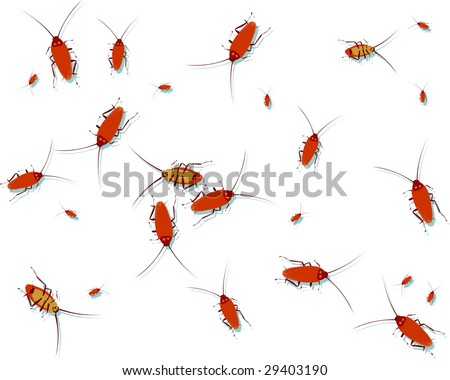 The isolated cockroaches on a white background