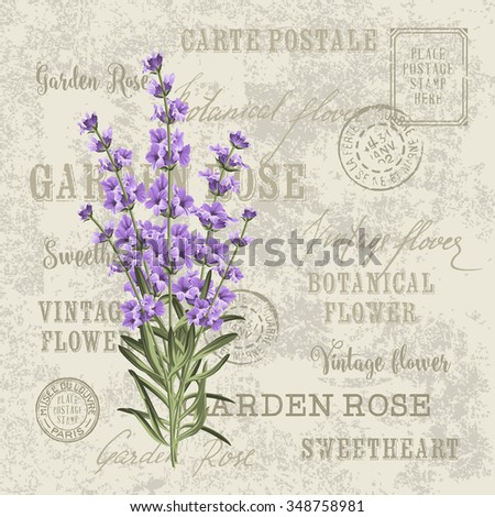The lavender elegant card. Vintage postcard background vector template for wedding invitation. Label with lavender flowers. Vector illustration.