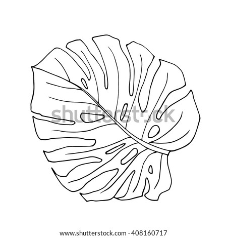 The monstera leave in black and white colors hand drawn design element vector isolated