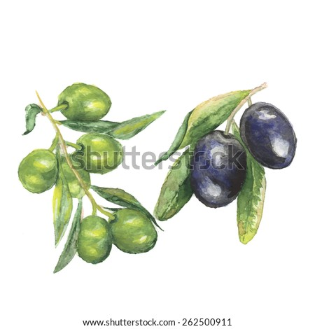 the olive watercolor vegetable vitamin isolated on the white background