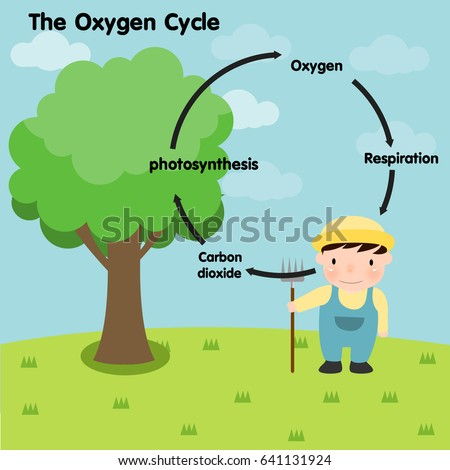 Wind and plant respiration