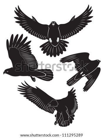 The picture shows a flying eagle - stock vector