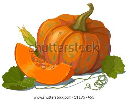 the pumpkin - stock vector