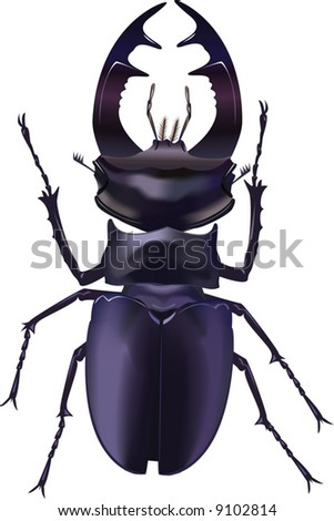The real bug. A vector illustration. It is isolated on a white background. - stock vector