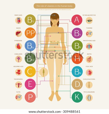 The role of vitamins in the human health. Visual scheme with the scientific name of vitamins and image systems of the human body.