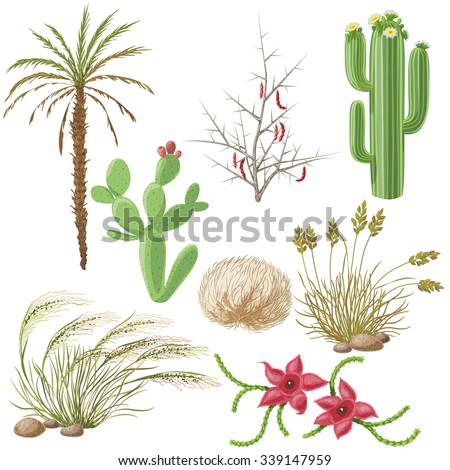 The Set of  steppe  and desert plants  isolated on white. - stock vector