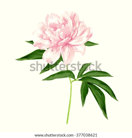 The single flowering light pink peony - stock vector