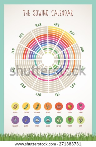The sowing calendar with sowing periods and months and set of colorful vegetable icons - stock vector