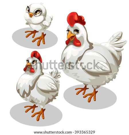 The stage of maturation of white chicken. Cute animal. Vector illustration.